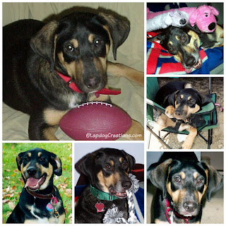 rescue mixed breed puppy smiling shepherd coonhound