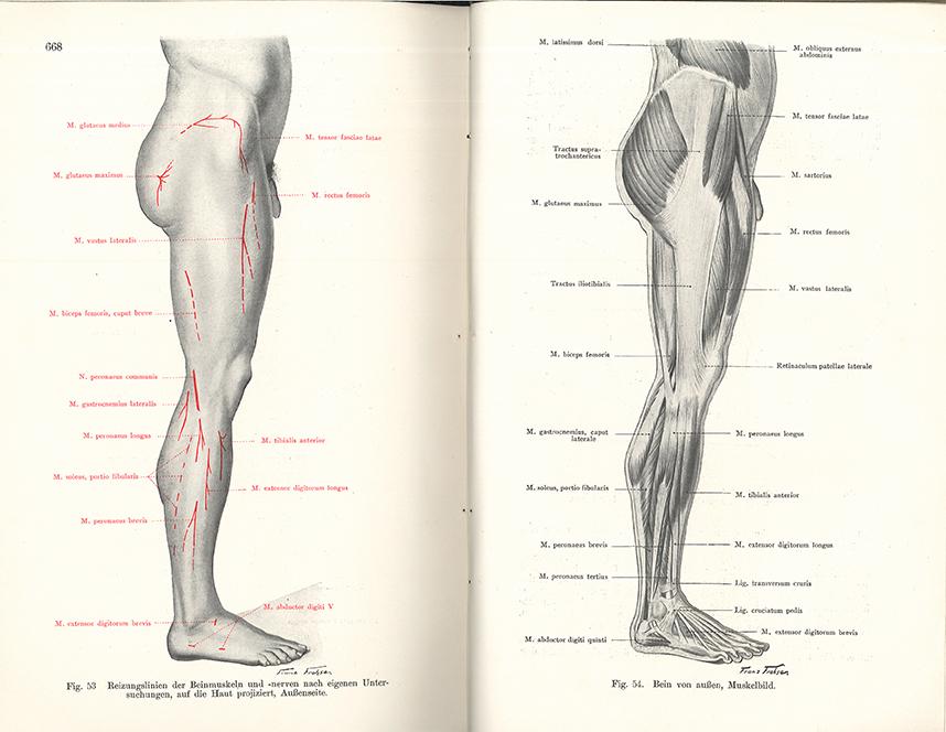 Berühmt Die Beinanatomie Bilder - Anatomie von Menschlichen ...