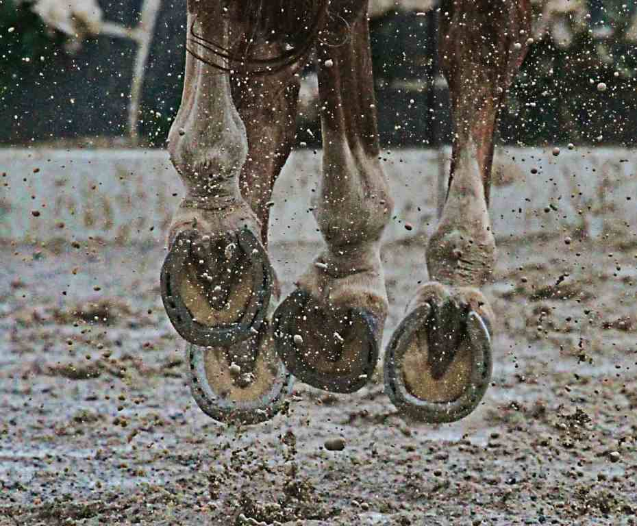 Treating Traumatic Hoof Injuries