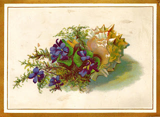 https://1.bp.blogspot.com/-GKlvQzg2vEc/WC9l5wjLpvI/AAAAAAAAeOM/2zDl24LTl4YYEg5yuTFwnk-fEYbQO3k0gCLcB/s320/flower-violets-shell-image-digital-printable-greeting.jpg