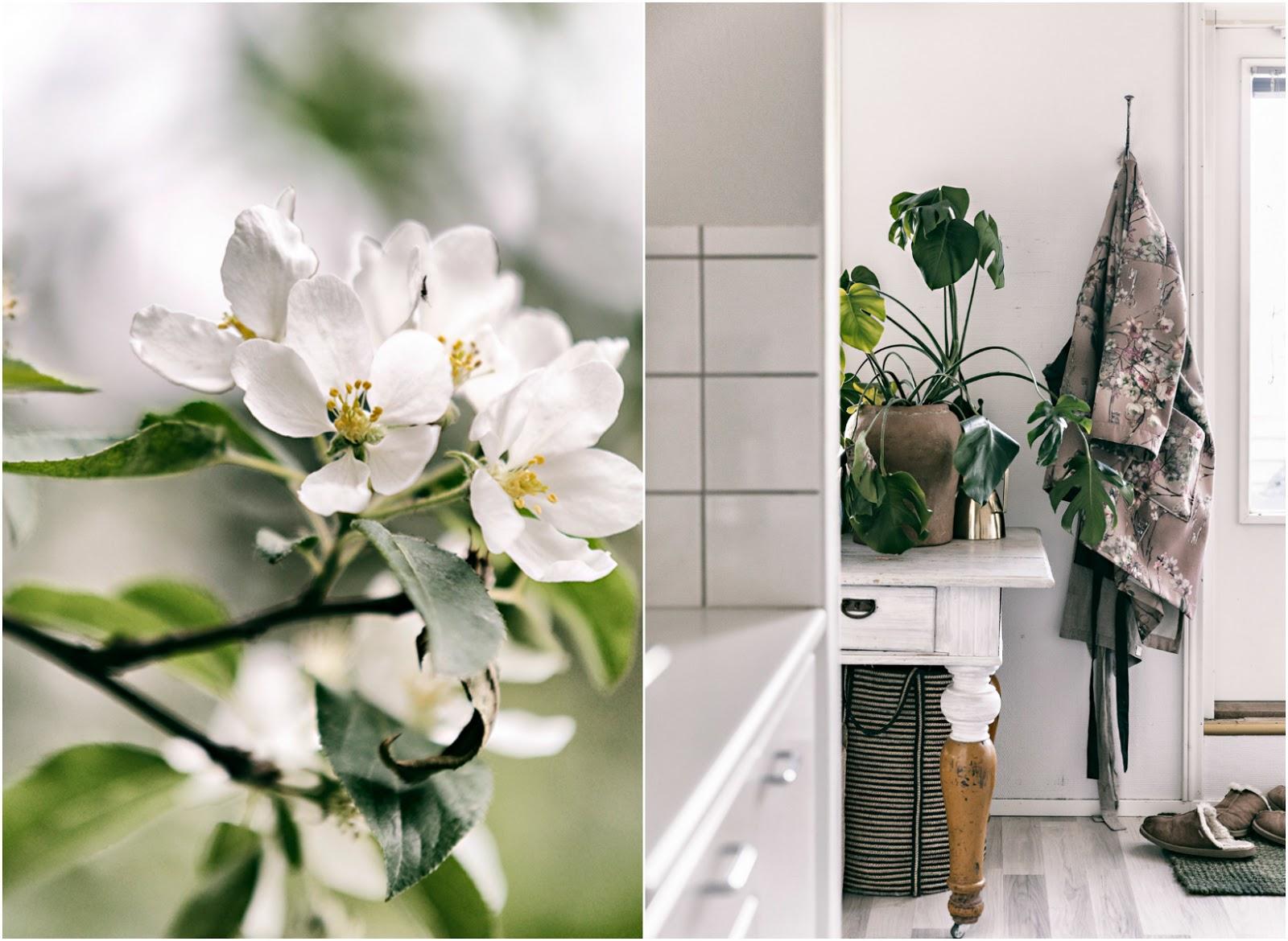 sisustus, sisustaminen, sisustusinspiraatio, koti, keittiö, vihersisustaminen, omenankukat, blossom, hyvä elämä, oma koti, valokuvaus, elämä, Visualaddict, valokuvaaja, Frida Steiner, Visualaddictfrida,