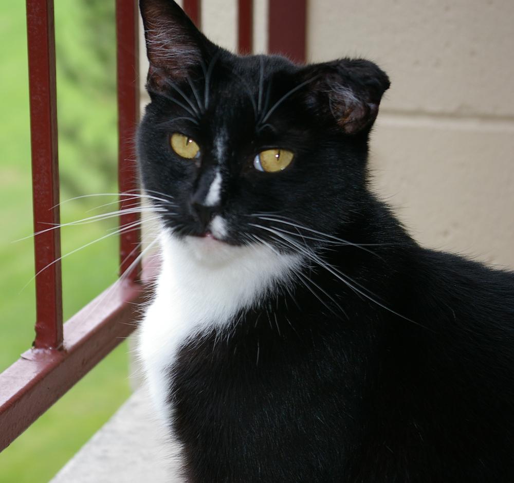 Catsparella: Pride and Prejudice and Cats