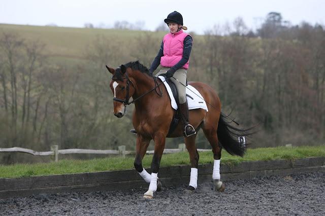 horse walking, horses, horse riding,