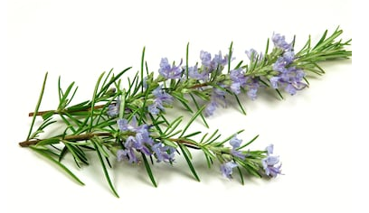 Hair Growth Toner Made of Rosemary