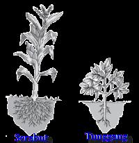 Penggolongan Tumbuhan Berdasar Akar Batang Daun Bunga Dan Biji Pusat Biologi