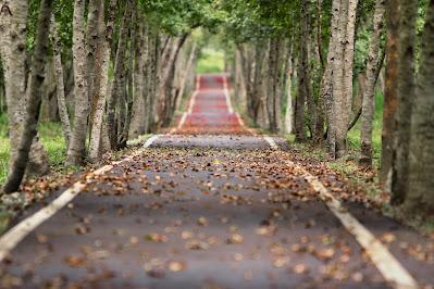 Foto de um caminho