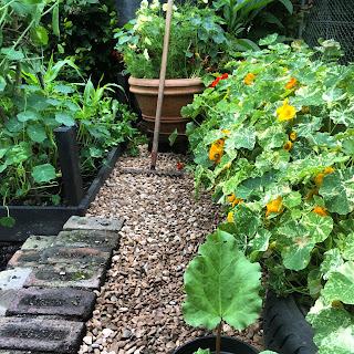 Gravel path in the garden
