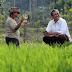 Telusuri Pematang Sawah, Sihar Berbincang-bincang dengan Petani Lanjut Usia