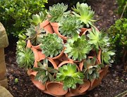箱庭やベランダーガーデニングに役立つテラコッタ鉢の応用15例