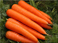 carrot - une carotte - Daucus carota subsp. sativus