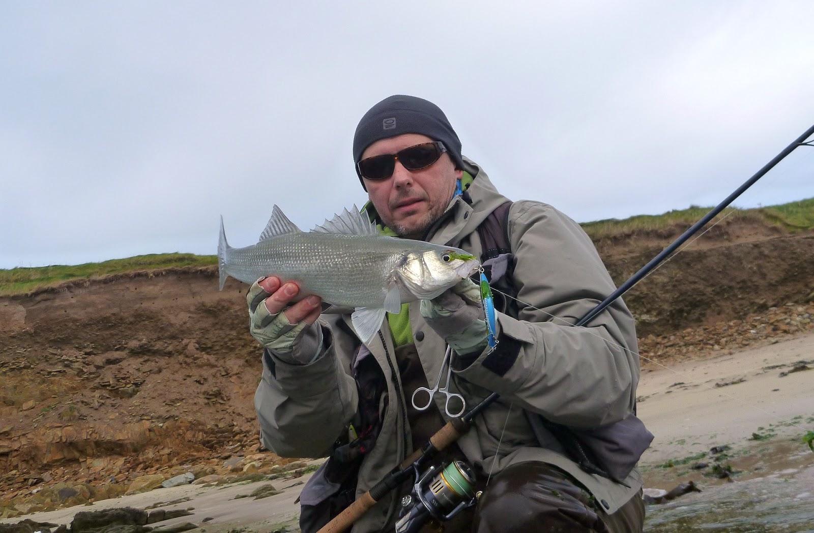 Sea bass hunting amazing end of the sea bass season 2016 for Bass fishing season