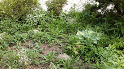 Koreatown Toronto New Front Garden Installation Before by Paul Jung Gardening Services--a Toronto Organic Gardener