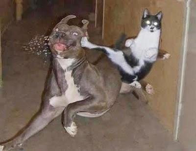Cat kicks a dog in the face