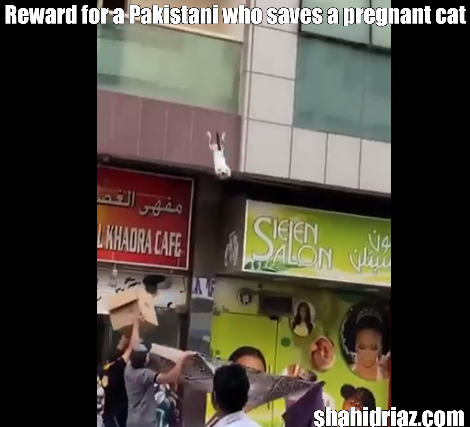 A reward has been announced for a Pakistani who rescued a pregnant cat from a building in Dubai