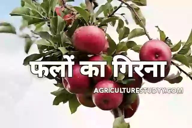 फलों के गिरने के कारण एवं उपाय ( Causes and remedies for fall of fruits )