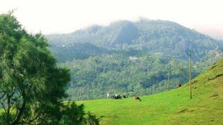 Bukit Bikium di tts