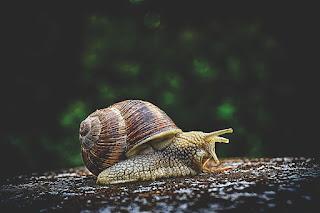 घोंघा Snail. Fact about Snail.