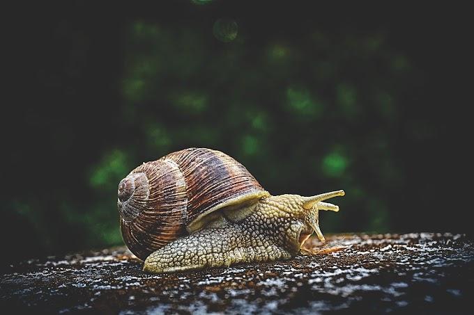 घोंघा Snail. Fact about Snail. Hindi facts.