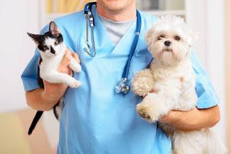 Esterilización gratuita para tus mascotas: Fechas de enero 2020
