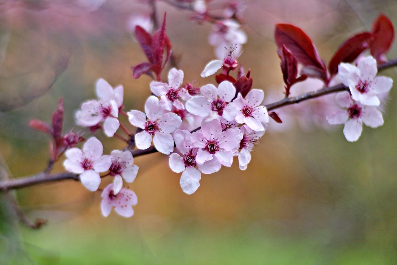 Blüten zum Sonntag
