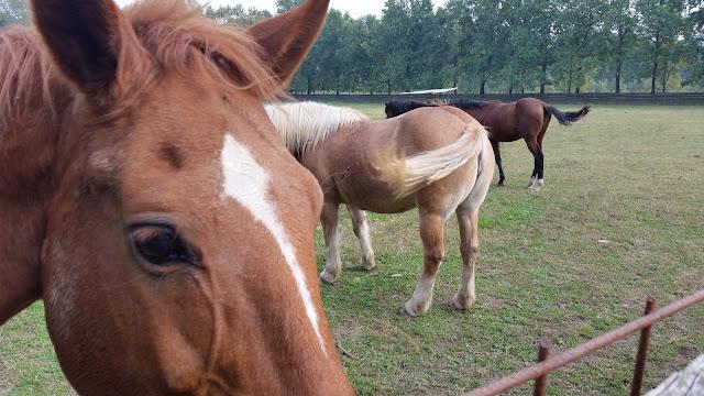 Maneggio cavalli agriturismo