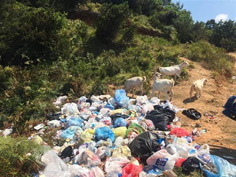 Ağva ve Bağırganlı Köyü Arasında Kalan Sardala Koyu Çöpler İçinde Kaldı