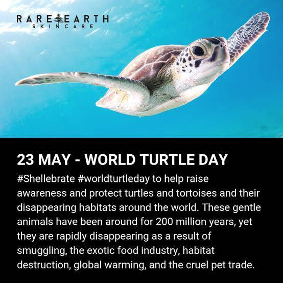 World Turtle day 2021:Date, theme, significance and history in hindi