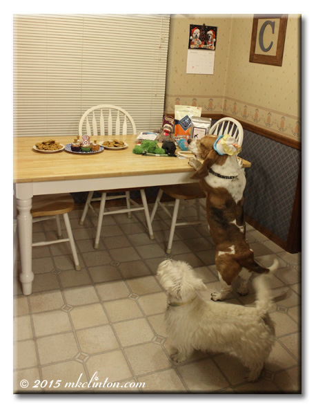 Bentley Basset standing against table and Pierre Westie howling