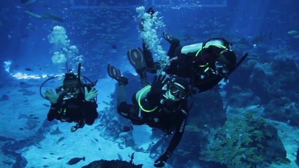Lặn nước dưới bể nuôi cá - Trải nghiệm thú vị và ý nghĩa khi đến S.E.A Aquarium