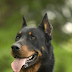 Rarest Dog Breeds In The World🐕🐶