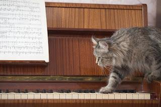 La música ofrece muchos beneficios a perros y gatos