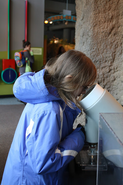 Checking through the microscope at the Peggy Notebaert Nature Museum in Chicago