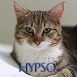 icone hypso