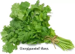 coriander spinach