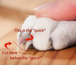 cara untuk merawat dan memotong kuku kelinci
