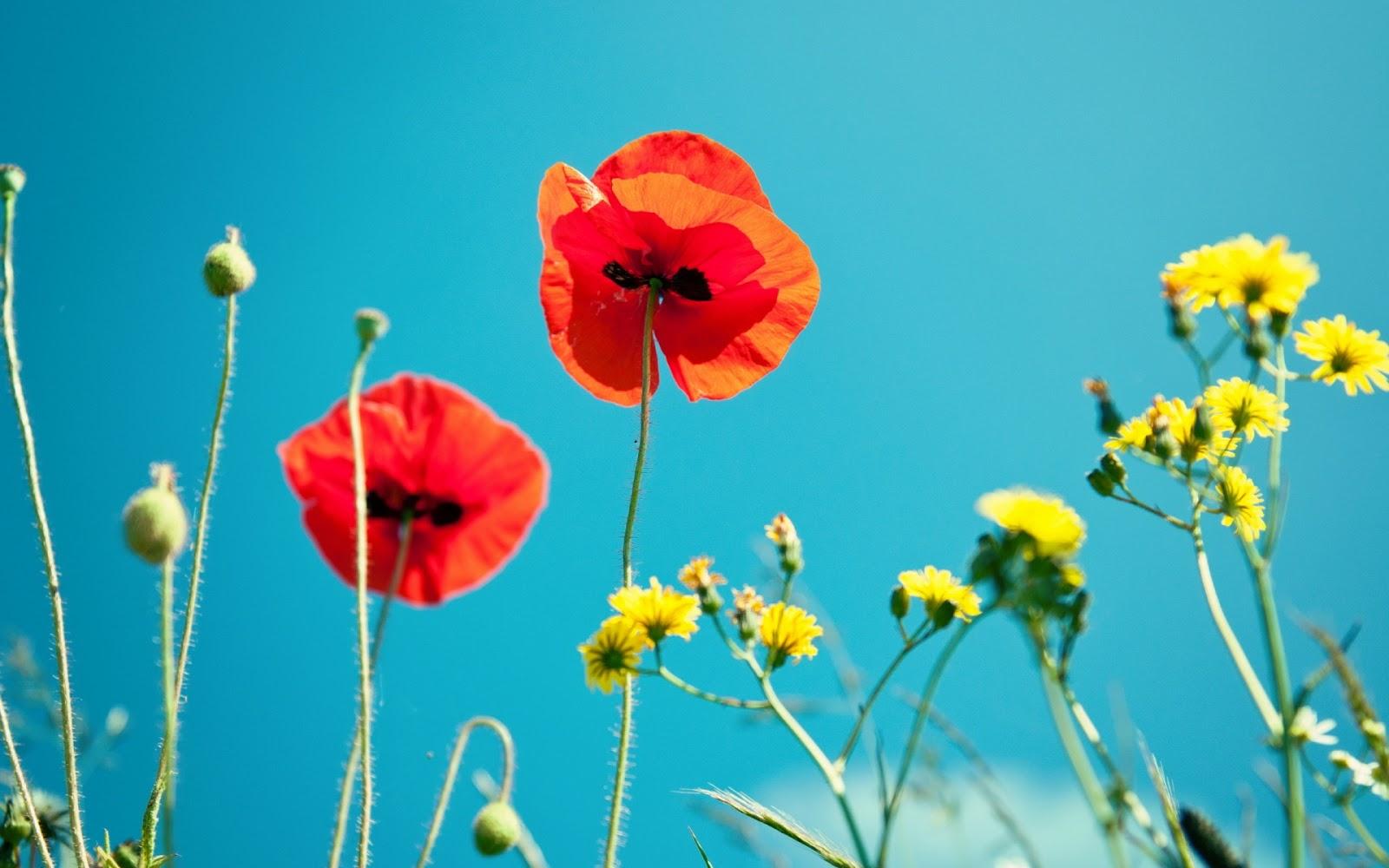 Bien connu Les Plus Beau Fond Ecran Fleurs | Fond Ecran Pc JF97