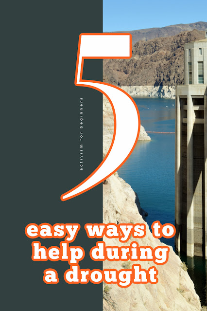 Three Easy Ways to Help the Environment During a Drought