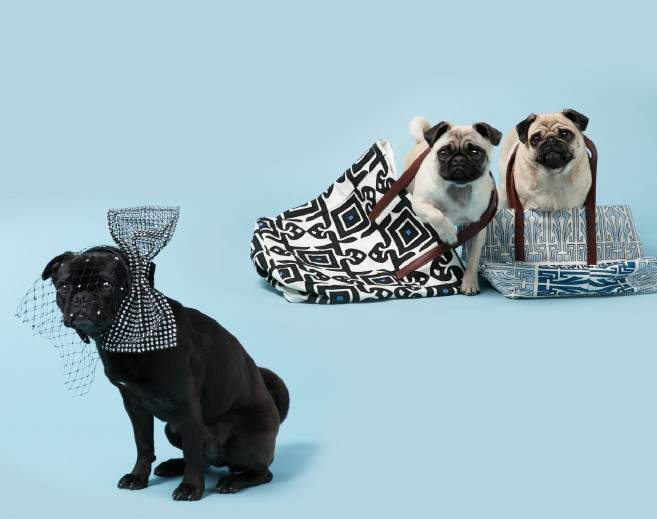 AVENUE 32 ADV|| DOGS BECOME MODELS!