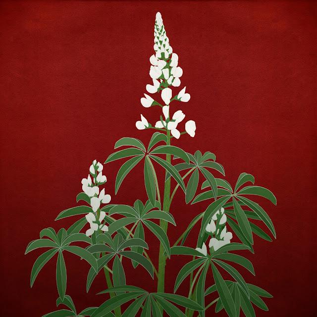 tramuso, chocho , altramuz , planta, flor