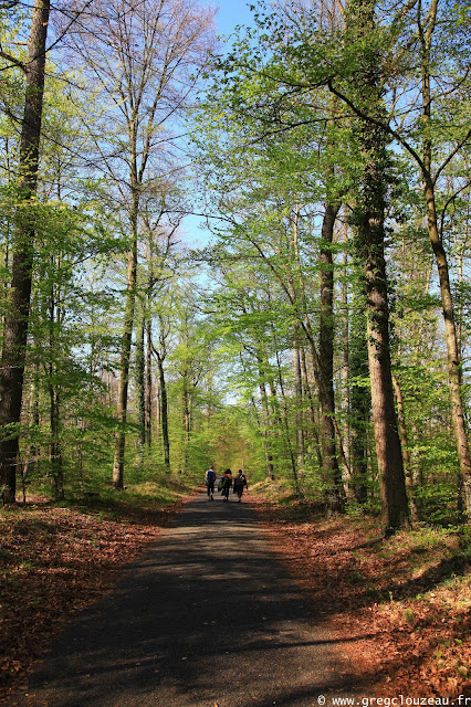 Route du Calvaire, Forêt de Fontainebleau