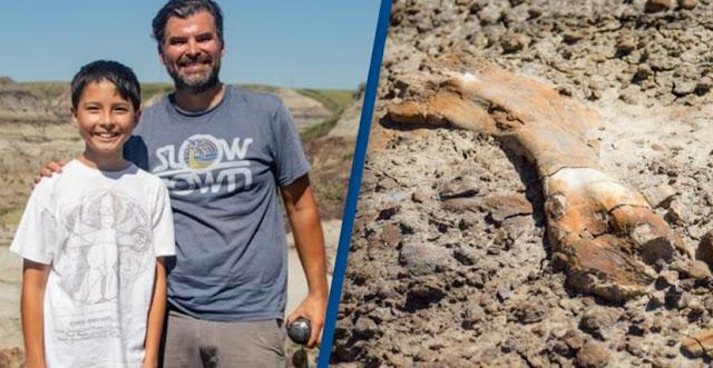 Bocah 12 Tahun Menemukan Kerangka Dinosaurus yang sangat Langka