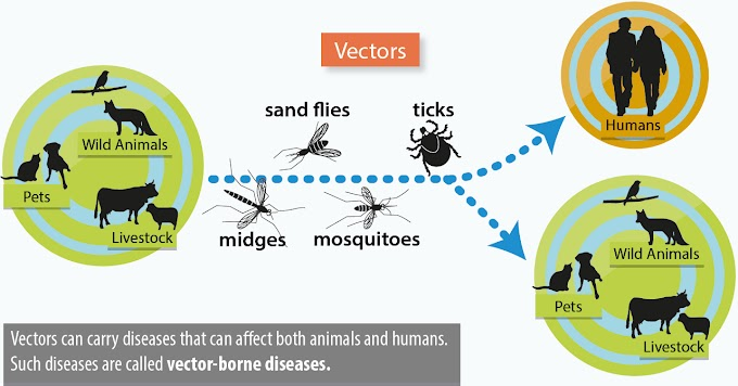 Limitations and delimitations of vector control
