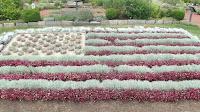 A well-done vegetal Stars and Stripes - Elizabeth Park, West Hartford, CT