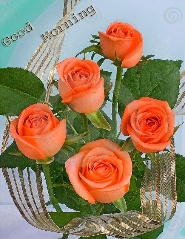 beautiful good morning with orange rose