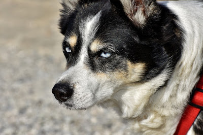Hybrid Dog Isn T That Just Another Word For