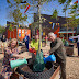 Onderzoek naar 'klimaatbomen' van start in Barendrecht