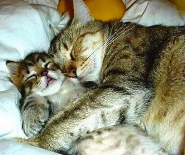 Une Photo Chat avec Maman