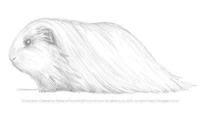 Illustration Sheltie Guinea Pig Rebecca Reynolds BA Hons