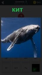 ответ на 3 уровень кит