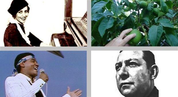 Cover History - A origem e as versões da canção Meu Limão, Meu Limoeiro